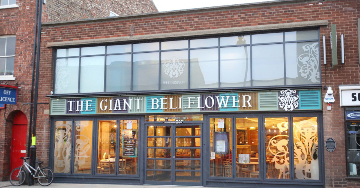 The Giant Bellflower, Selby